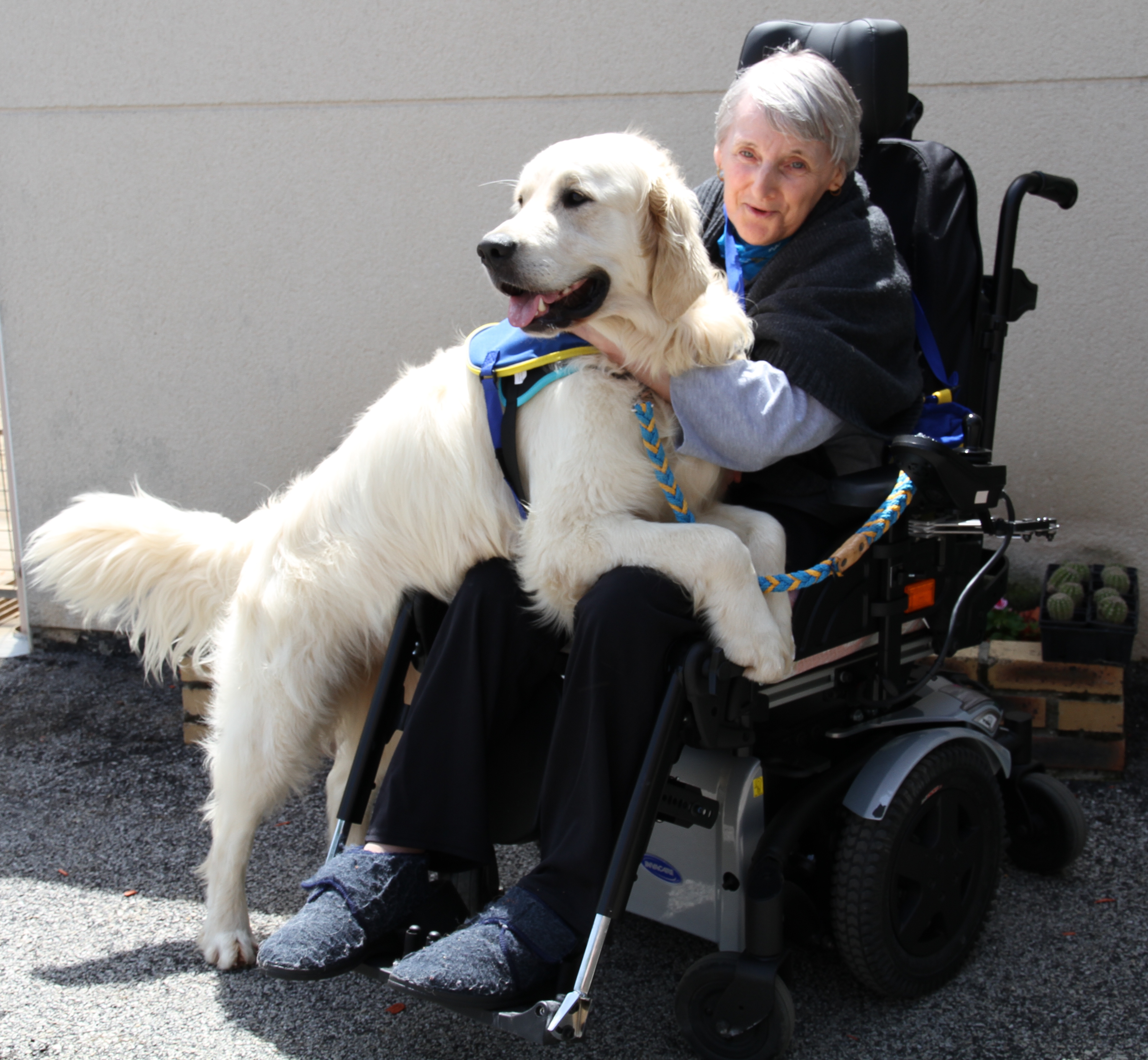 Offrir un chien à une personne handicapée pour l'accompagner dans la vie quotidienne